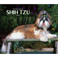 بالصور معلومات عن كلاب الشيتزو SHIH_TZU dogs